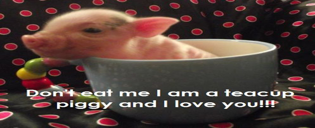 Some Facts about Teacup Pigs1